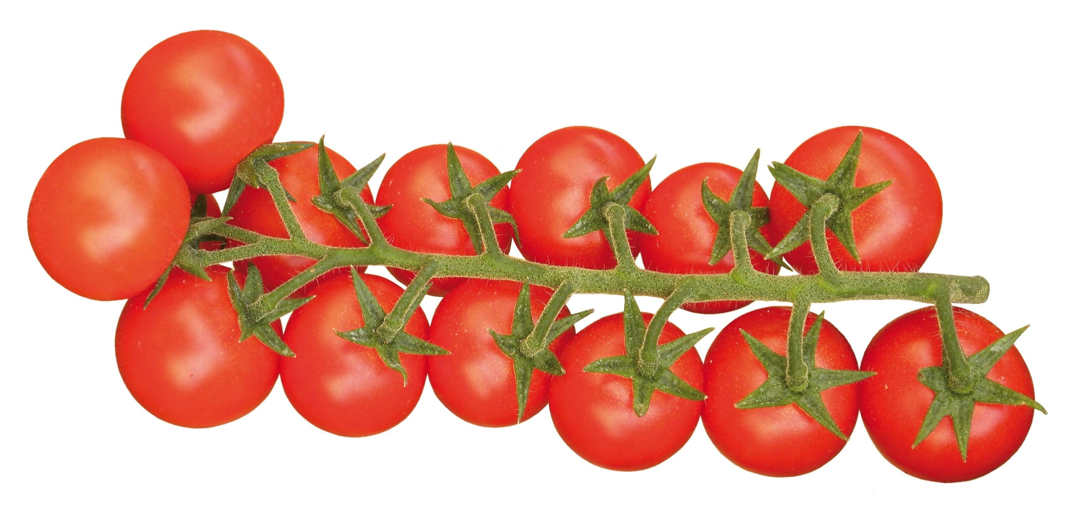 pomodoro cherry scontornato