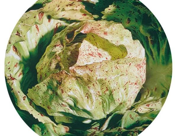 variegata di lusia