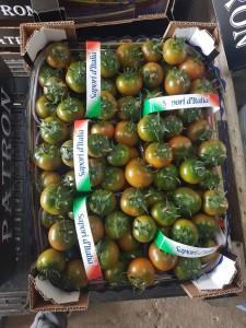 KALLYSPERA- frutto invaiato