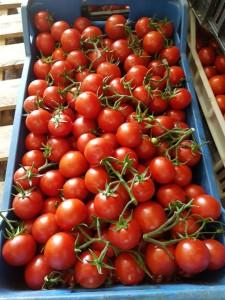 KALLYSPERA- frutto rosso